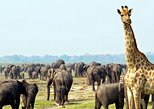 2 Days Etosha wildlife Safari-Namibia (Camping)