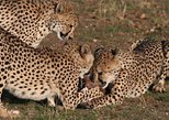 1 Day Carnivore Feeding Tour - Namibia