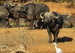 Africa & Mid East - Botswana: 11 Days Botswana Northern Experience (Accommodated)
