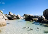 Cape Town: Cape Point & Winelands Combo Full Day Tour