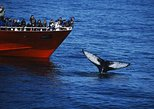 Classic Whale Watching | the original from Reykjavík