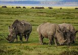 Lake Nakuru National Park Full Day