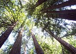 Muir Woods Tour of California Coastal Redwoods (Entrance fee included)