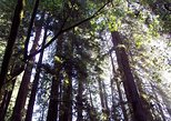 Nature Wildlife Package to California's Redwoods with Aquarium and Zoo Visit