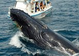 Samaná Peninsula Whale-Watching Tour from Punta Cana