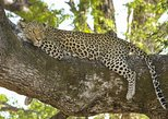 Yala National Park Private Safari