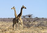 4 Day Etosha National Park and Swakopmund (Camping)