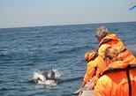 Dolphin Watching from Portimao