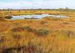 Audio Tours to Varnikai Path in the Swamp