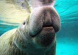 Private Manatee Tour