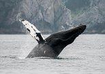 Juneau Wildlife Whale Watching & Mendenhall Glacier