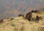 5 Days Historical Tour to North Ethiopia