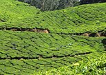 Best of Kerala 7 Days Private Tour from Cochin with Munnar ,Thekkady & Houseboat