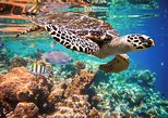 Underwater Maya Snorkeling Tour