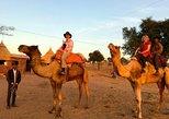 Camel Safari Half -Day Tour In Jodhpur