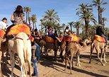 1-Hour Palm Grove Camel Ride