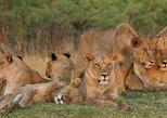 12 Days Victoria Falls & Kruger