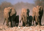 3-Day Etosha Tour from Windhoek