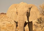 7 Day Northern Namibia Adventure - Camping Tour