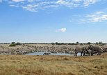 3-Day Etosha Wildlife Small Group Tour from Windhoek