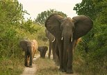 3 Days 2 Nights Queen Elizabeth National Park