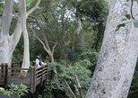 uMkhuze Fig Forest Walk