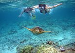 Snorkel Eco-Tour: North Shore, West Coast, Honolulu options - all gear provided