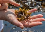 Irish Seaweed Foraging Tour and Seaweed Inspired Cooking Class in a Local's Home