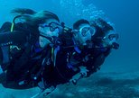 Diving Tour at Bona and Otoque Islands