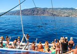 Dolphin and Whale Watching Catamaran Cruise from Funchal