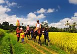 Horse Riding Through Rice Field