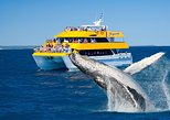 Spirit of Hervey Bay Whale Watching Cruise