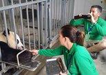 Dujiangyan Panda Volunteering Experience with Lunch
