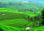 Ancient Temples and Jatiluwih Rice Terrace Private Tour