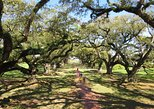 Combo Oak Alley or Laura Plantation and Swamp Boat Tour