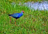 Muthurajawela Bird Watching Tour