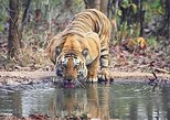 Ranthambhore Tiger Tour of Delhi, Agra, and Jaipur 5 Star Hotel