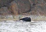 Small-group Saimaa Seal-Watching Cruise in Linnansaari National Park