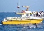 Dolphin Watching Excursion in Gibraltar