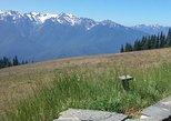 Hurricane Ridge - Olympic Mountains