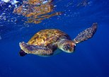 Snorkeling Tour with Sea Turtles and Stingrays