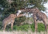 2 Days safari to Mikumi and Udzungwa Mountains from Morogoro