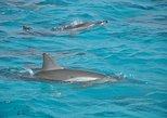 Sataya Island Marsa Alam Dolphin House