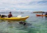 Seal Island and Penguin Island or Point Peron Sea Kayak Tour