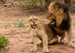Buyela e-Africa , Full day safari tour in the Pilanesburg Big 5 nature reserve