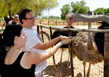 Highgate Ostrich Farm Tour
