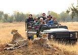 Kruger Group Safari 6 Day & 5 Nights Lodge ,Treehouse Safari