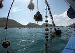 Oysters and Trees: The Hidden Gems of Dubrovnik Area