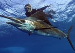 Swim with the sailfish - full day snorkeling experience