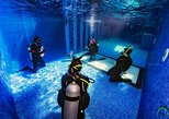 PADI Open Water 3 day course - learn to scuba dive in the Mexican Caribbean